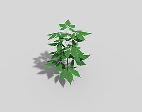 Low poly Plant 3D asset low-poly tree