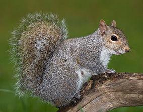 3D model low-poly Squirrel squirrel