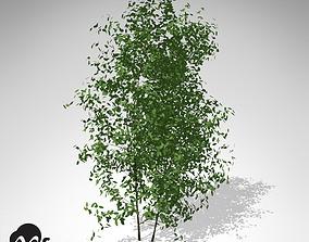 3D XfrogPlants Common Privet