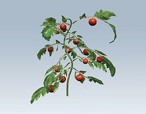 Tomato juicy 3D model