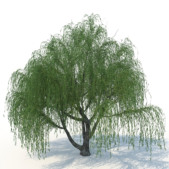 realistic willow trees