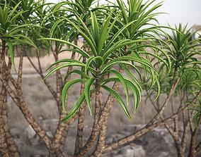 3D model XfrogPlants Tree Aloe - Aloe Barbera