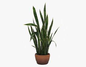 3D model Snake plant Dracaena trifasciata 03