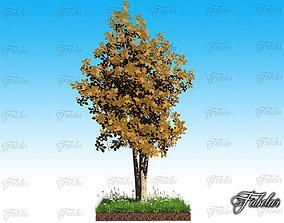 3D Birch and grass
