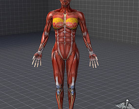 female 3D model Human Female Muscular System