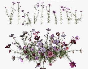 Flower kosmeya 3D low-poly