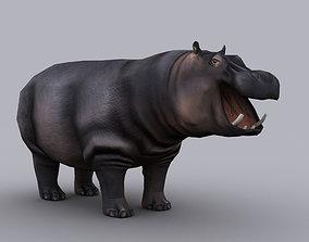 HIPPOPOTAMUS GAME READY ANIMATED MODEL animated