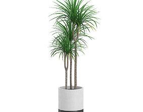 Potted Dracena Plant 3D model