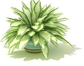 Green And White Leafed Pot Plant 3D