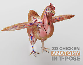 Chicken anatomy in T-pose for rigging 3D