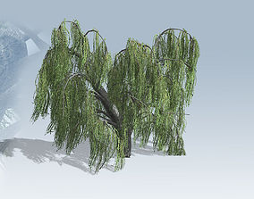 3D asset Weeping Willow Tree Set