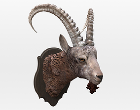 3D asset Mountain Sheep Head High Detail with Texture 3