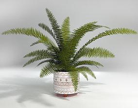 Fern Plant 3D Model nature