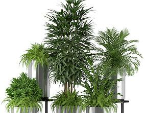 3D model Plants collection 206