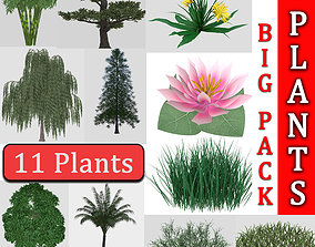 Collection highly detailed 3d models of plants pertusa