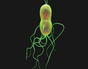 3D model Bacteria