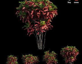 Croton plant set 06 3D model bush
