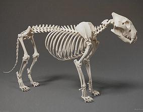 skeleton 3D Lion Skeleton Sculpture
