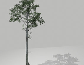 Tall tree 3D model