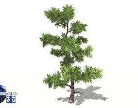 Spruce tree type 3d model realtime