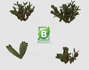 Cactus - Prickly Pear - Opuntia Ficus-Indica 3D model