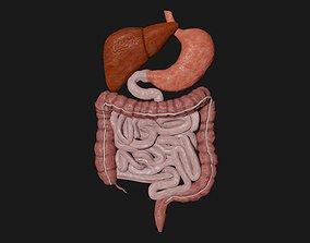Digestive System 7 3D asset