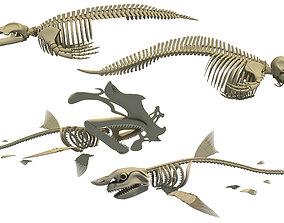 3D Sharks Skeletons fish