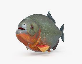 Piranha HD 3D