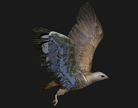 3D model Hawk low poly fully rigged