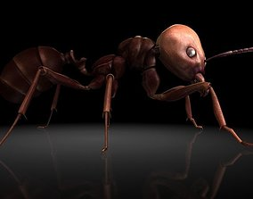 3D model Insect Collection 1 ant
