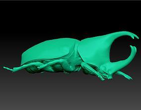 3D printable model Rhinoceros Beetle