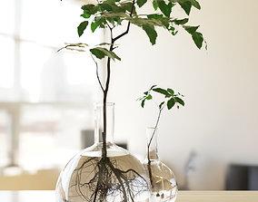 3D model Branch in flask