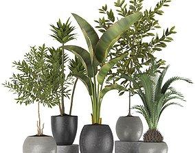 3D model Plants collection 5