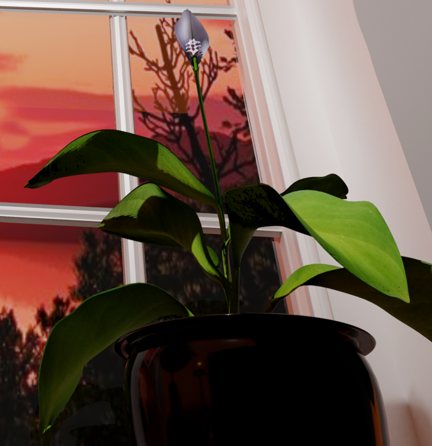 Spatifillum plant