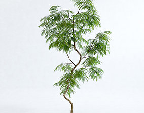 Everfresh Tree 2M - Cojoba arborea var 3D model