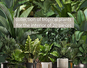 Collection of potted plants for the interior of 20 3D 2