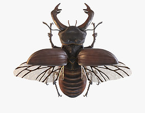 3D asset Stag Beetle
