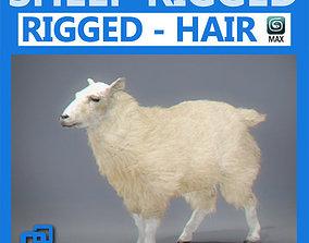 3D Rigged Sheep