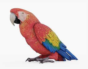 Red Macaw Parrot 3D asset realtime