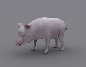 animated PIG GAME READY ANIMATED MODEL