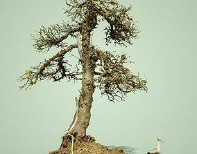 3D model Dead Bonsai Tree 4