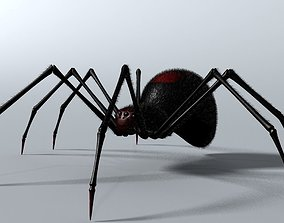 3D asset Black Spider Rigged