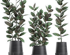 3D Ficus tree in flowerpots 628