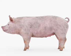 3D model Pig with Fur