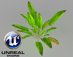 3D model animated 4x Cryptocoryne Vertex Animation
