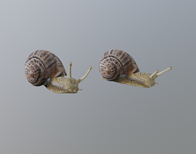 Snail 3D model rigged slippery