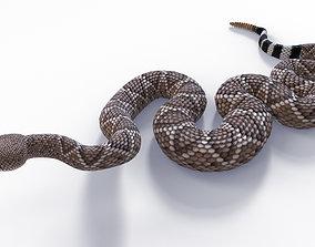 3D model Rigged Western Diamondback Rattlesnake