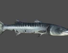 3D asset Barracuda