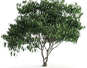 3D model plant 58 A
