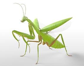 Mantis Rigged 3D model